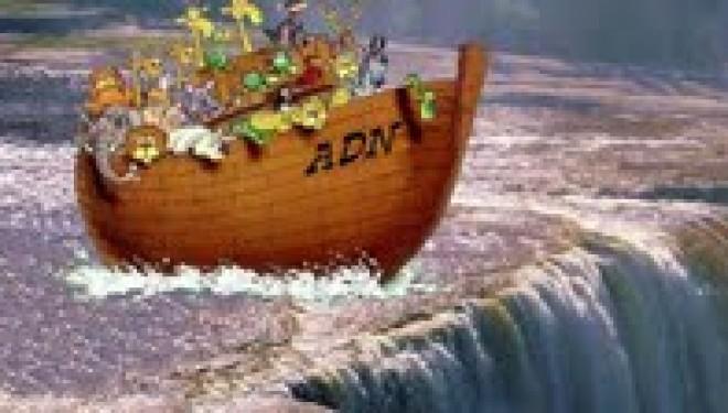 Paracha de la semaine Noa'h