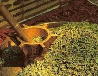 Henna Déco vous organise des Hennés «sur mesure» dans la pure tradition orientale !