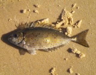 «d'ici et d'ailleurs» Ô pêcheurs d'Ashdod !