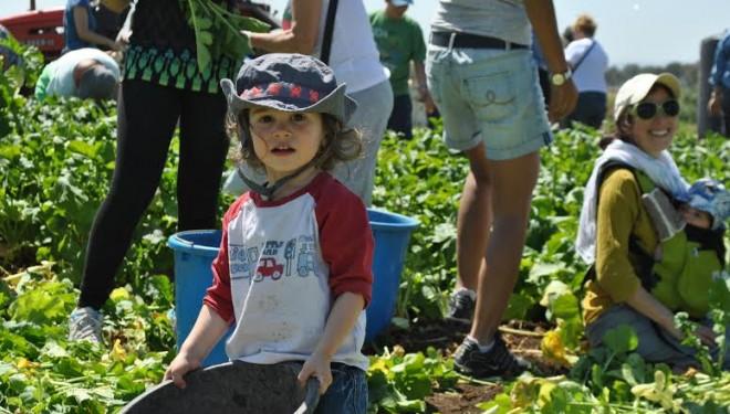 la F.I.F. et Leket Israël ont organisé La cueillette de l'Espoir 2014