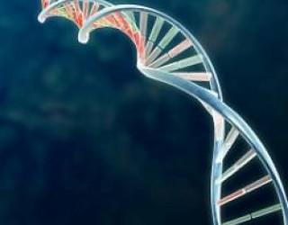 Un algorithme pour identifier les gènes du vieillissement