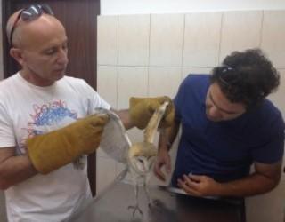 Ashdod : le service veterinaire municipal vient au secours d'un hibou épuisé