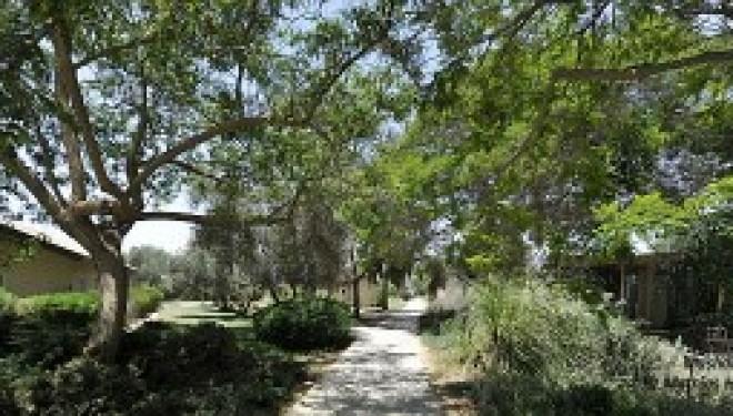 Kibbutzimer a Jérusalem : Séjour linguistique novateur et exclusif