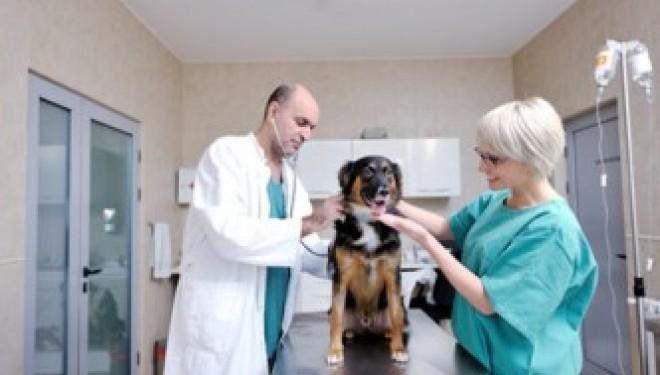 Olim : Cours de préparation à l'examen pour les vétérinaires