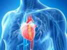Des chercheurs de l'université de Tel Aviv inventent un patch cardiaque bionique contrôlable a distance