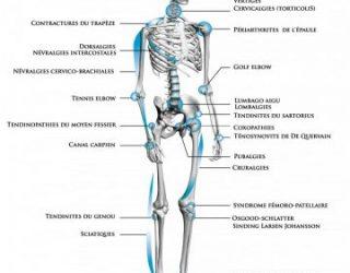 Qu'est-ce que l'ostéopathie  par DOUGLAS AYACHE