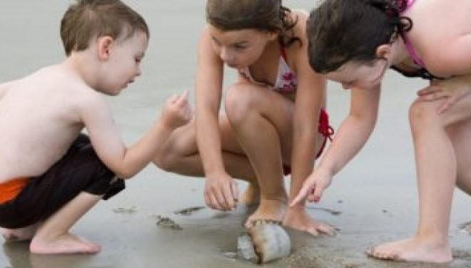Ashdod : Avec le beau temps les méduses sont de retour