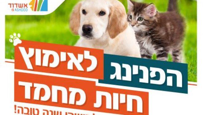 Ashdod : un événement festif organisé pour les animaux à adopter