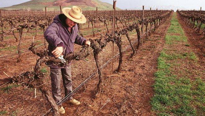 Bordeaux, ville jumelée  à Ashdod met  à l'honneur les vins israéliens dans le plus grand musée du monde dédié au vin