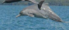 Une trentaine d'espèces de dauphins en voie de disparition ont été observées à l'ouest de la côte d'Ashdod