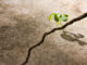 Psychologie et judaïsme, la puissance de la résilience
