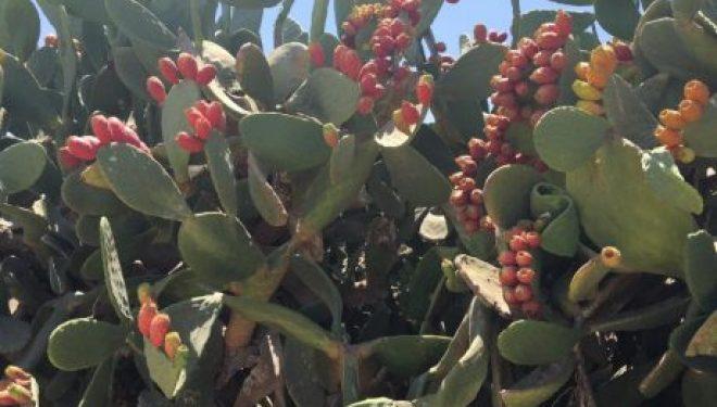 Escapade et découverte dans le sud le Mercredi 6 Septembre 2017 avec l'association CFA d'Ashkelon