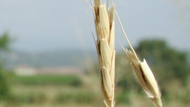 Le point de vue d'Ezra : découvertes mondiales réalisées en Israël assurant la sécurité alimentaire de l'Humanité.