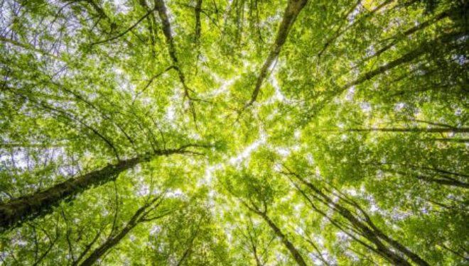 Psychologie et judaïsme: la nature et ses secrets par Hanna Lachkar Haddad psychologue