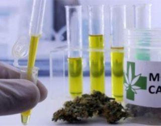 La chaîne israélienne Super-Pharm commence à vendre du cannabis médical
