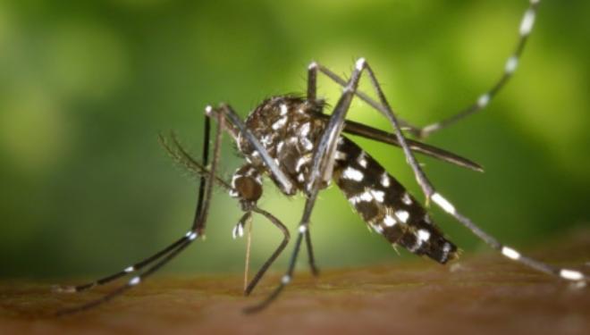Prévention face aux moustiques et aux maladies suite aux pluies abondantes de ce mois de Juin 2018